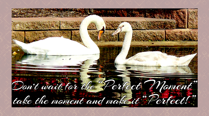 The Perfect Moment_720x400