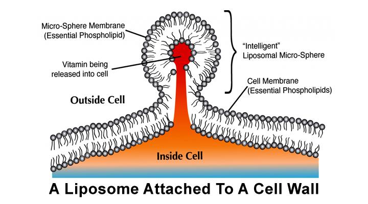 How we make liposomal vitamin c_part02_720x400