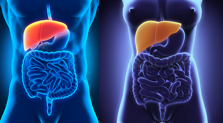 030-A Healthy Liver Is Vital for Life_720x400